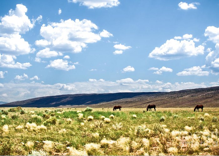 ryankellyphotography@gmail.com Greeting Card featuring the photograph Arizona Desert Horses by Ryan Kelly