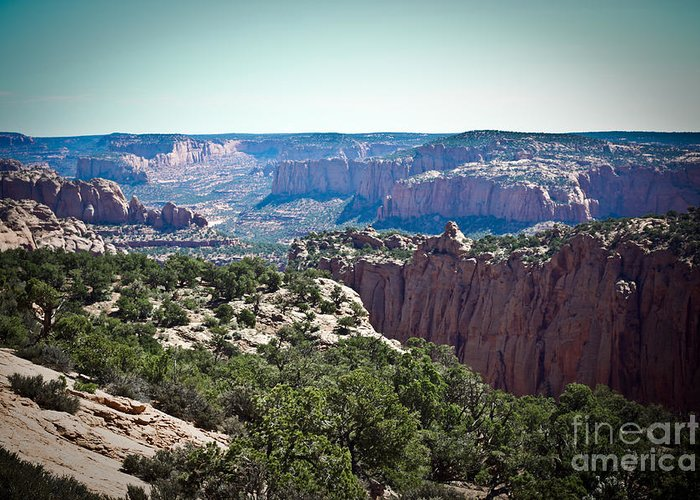 ryankellyphotography@gmail.com Greeting Card featuring the photograph Arizona Desert Landscape by Ryan Kelly