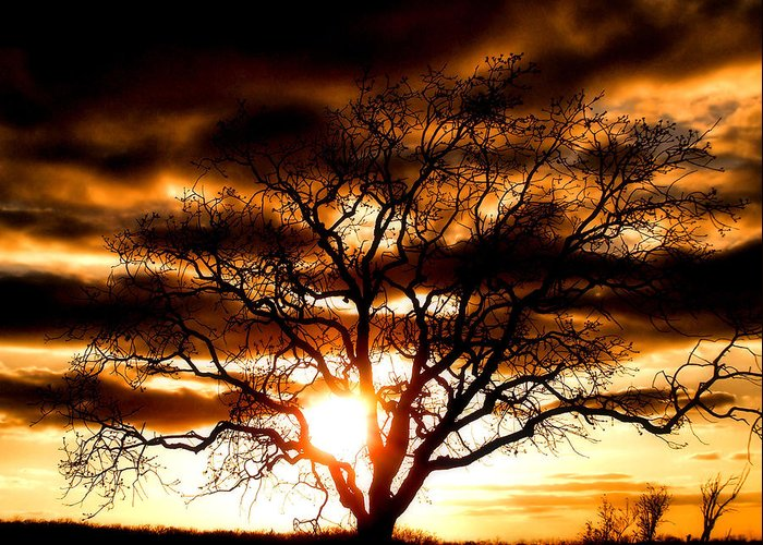 Sunset Greeting Card featuring the photograph Arms Wide Open by Karen M Scovill