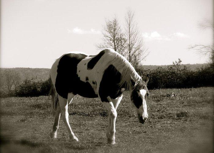 Around The Pasture Greeting Card featuring the photograph Around The Pasture by Debra   Vatalaro