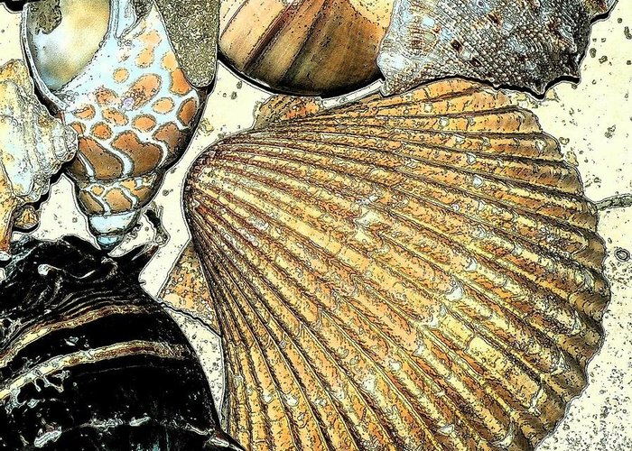 Seashell Greeting Card featuring the photograph Art Shell 2 by Stephanie Troxell