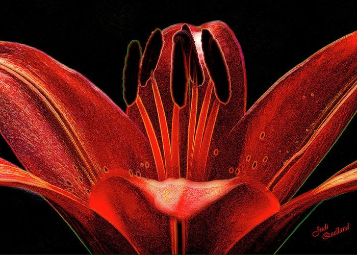Lily Greeting Card featuring the photograph Artistic Red Pixie Asiatic Lily by Judi Quelland