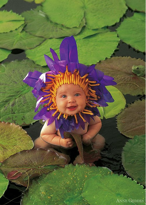 Flower Greeting Card featuring the photograph Waterlily by Anne Geddes