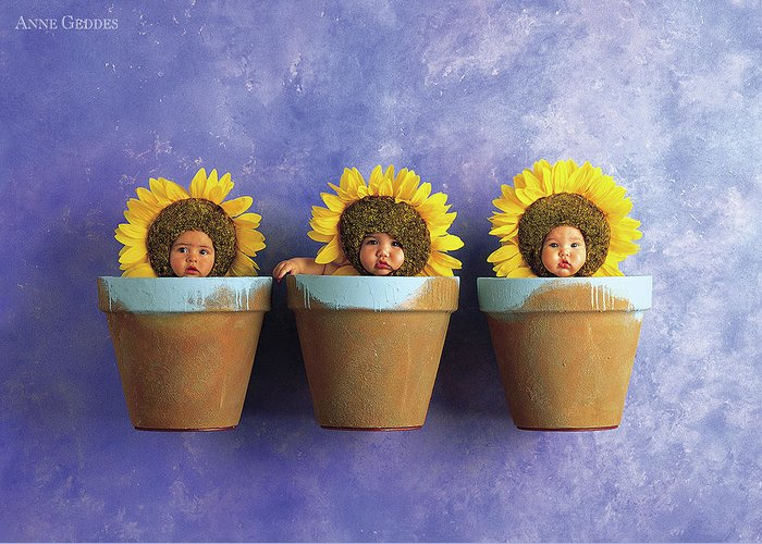 Sunflower Greeting Card featuring the photograph Sunflower Pots by Anne Geddes