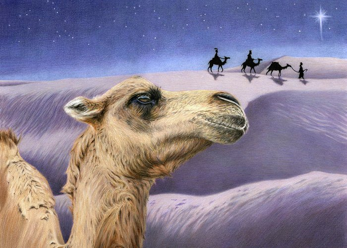 Camel Drawings Greeting Cards