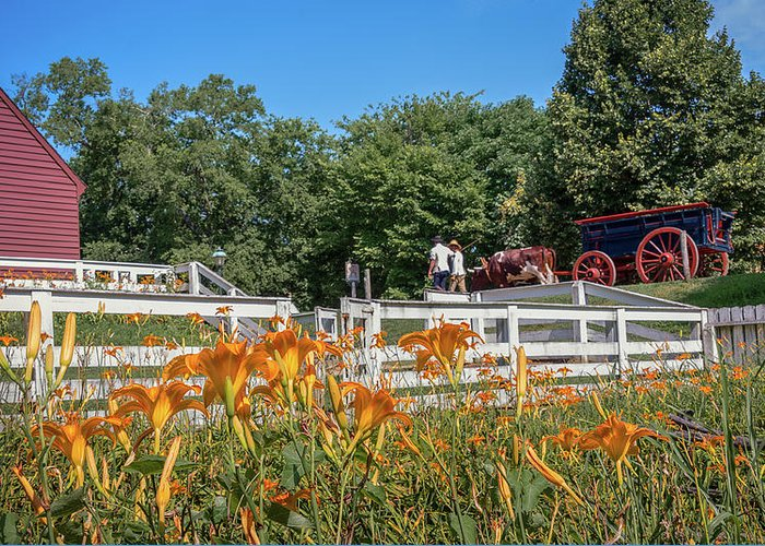 Williamsburg Greeting Card featuring the photograph Daylilies And Oxen Wagon by Wayne Reynolds