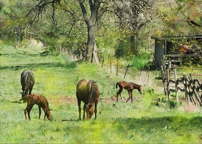 Spring Colts Greeting Card featuring the digital art Spring Colts by John Beck