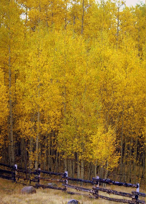 Fall Colors Greeting Card featuring the photograph Aspen Fall 2 by Marty Koch