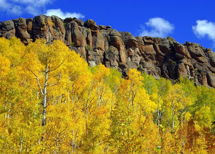 Fall Colors Greeting Card featuring the photograph Aspen Glory by Marty Koch