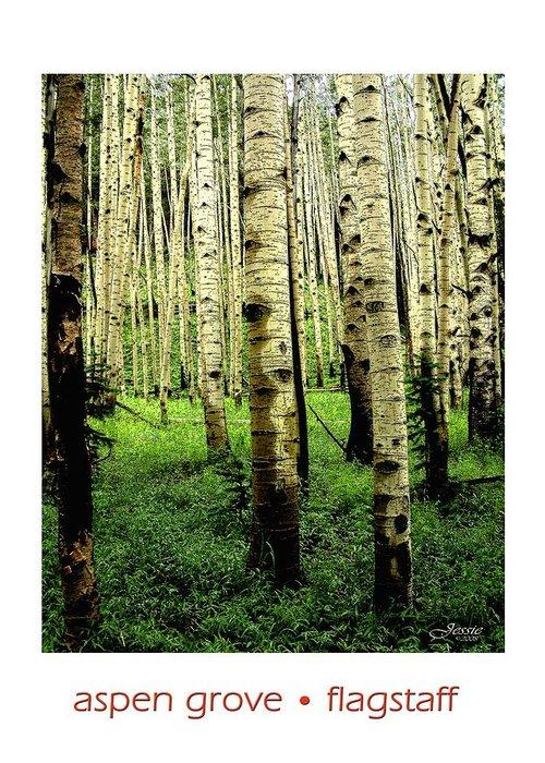 Aspen Greeting Card featuring the photograph Aspen Grove Flagstaff Arizona by Jessica Westermeyer
