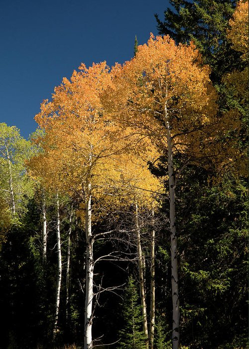 Grand Teton Greeting Card featuring the photograph Aspens And Sky by Steve Stuller