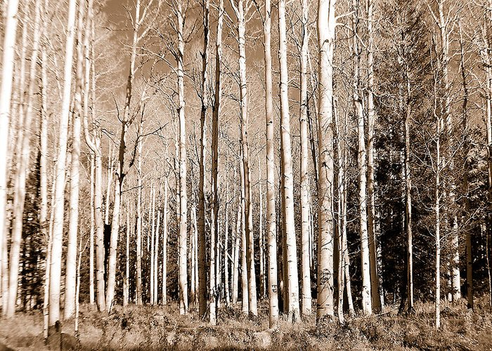 Aspens Greeting Card featuring the photograph Aspens by Heather S Huston