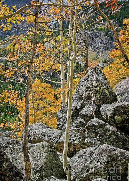 Rocky Greeting Card featuring the photograph Aspens Rocks And Longs Peak by Brent Parks