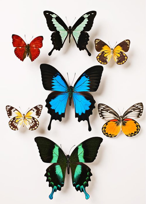 Butterfly Greeting Card featuring the photograph Assorted Butterflies by Garry Gay
