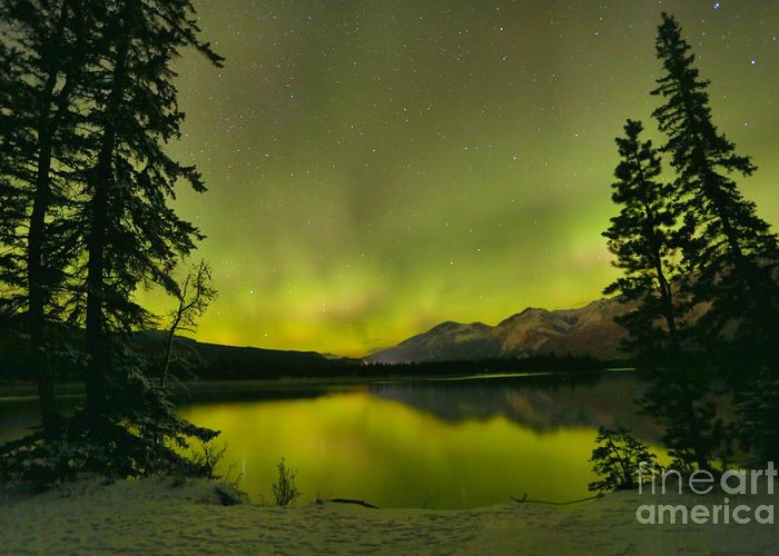 Canadian Northern Lights Greeting Card featuring the photograph Aurora Over The Forest by Adam Jewell