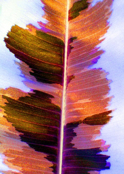 Pink Greeting Card featuring the photograph Autumn Abstract by Carolyn Stagger Cokley