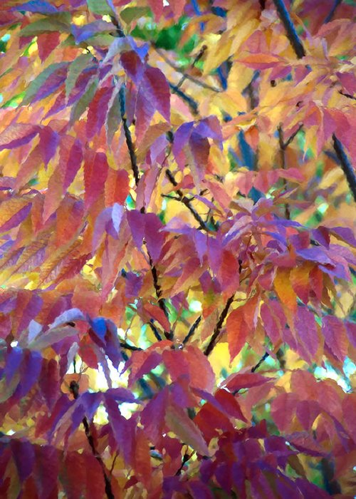 Ash Tree Greeting Card featuring the photograph Autumn Ash Tree 1 by Steve Ohlsen