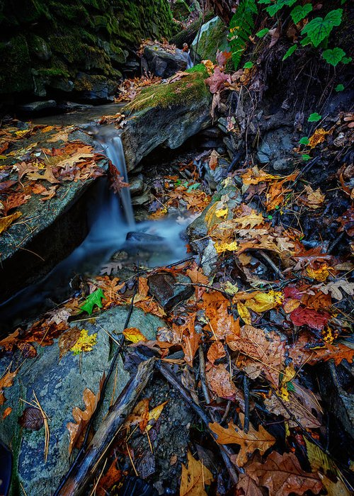 Autumn Greeting Card featuring the photograph Autumn At A Mountain Stream by Rick Berk