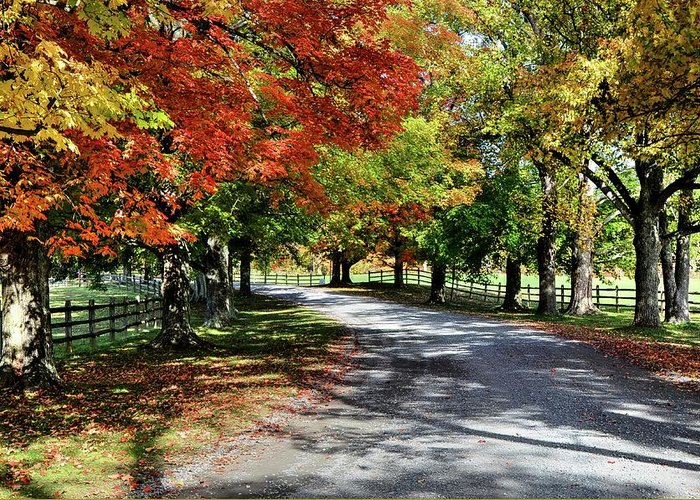 Autumn Greeting Card featuring the photograph Autumn At Oatlands Lane by Ronda Ryan