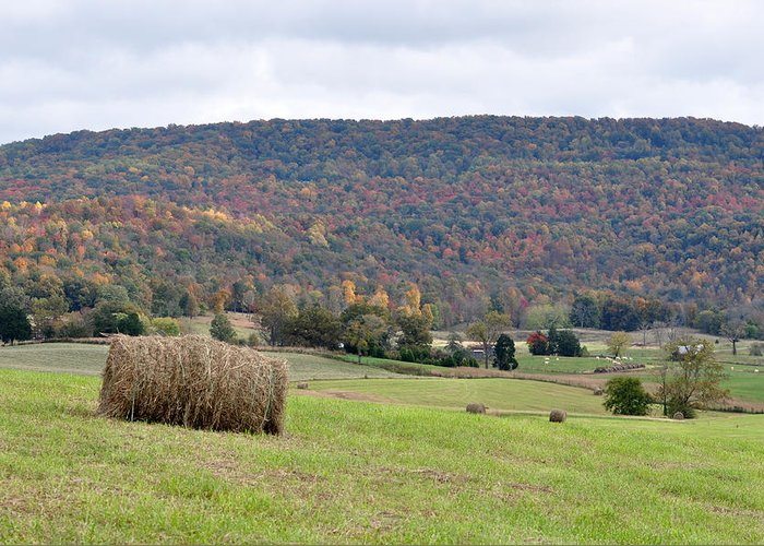 Landscapes Greeting Card featuring the photograph Autumn Bales by Jan Amiss Photography