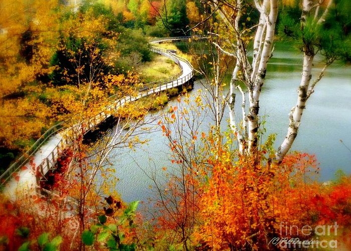 Autumn Greeting Card featuring the photograph Autumn Birch Lake Boardwalk by Patricia L Davidson