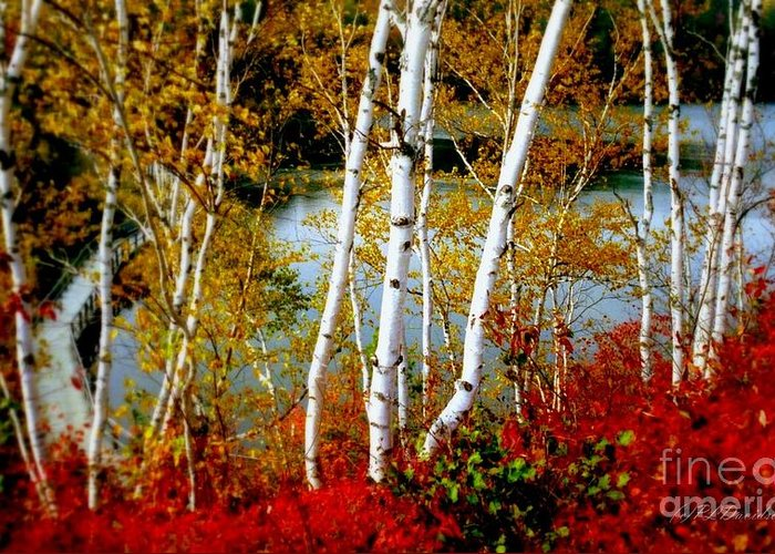 Autumn Greeting Card featuring the photograph Autumn Birch Lake View by Patricia L Davidson