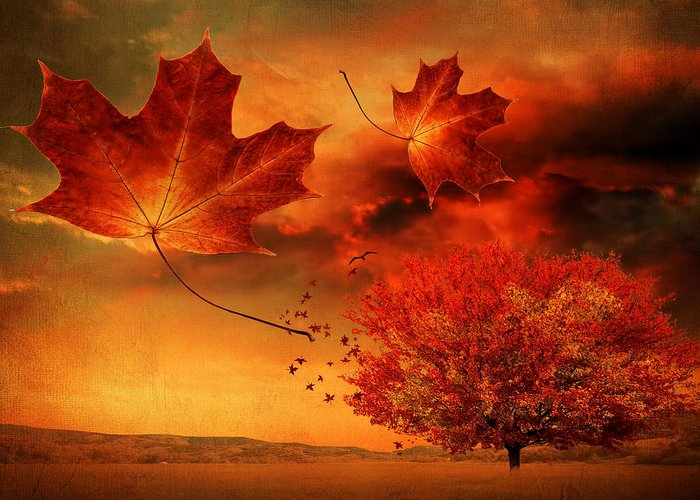 Maple Tree Greeting Card featuring the photograph Autumn Blaze by Lourry Legarde