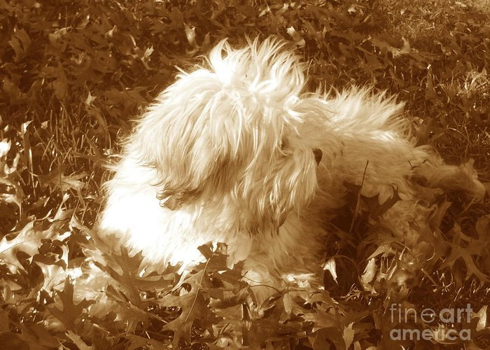 Dog Teddy Outdoors Leaves Fall Autumn Animals Greeting Card featuring the photograph Autumn Breeze 2 by Reina Resto