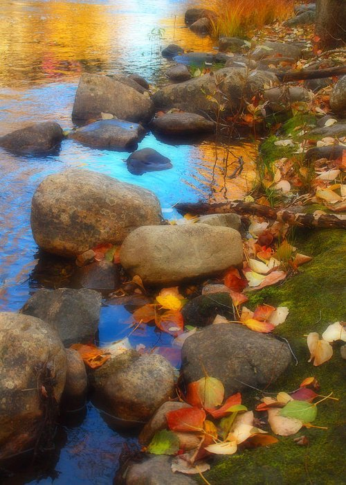 Autumn Greeting Card featuring the photograph Autumn By The Creek by Tara Turner
