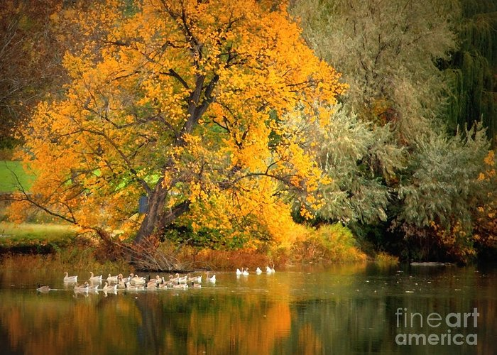 Fall Greeting Card featuring the photograph Autumn Calm by Carol Groenen