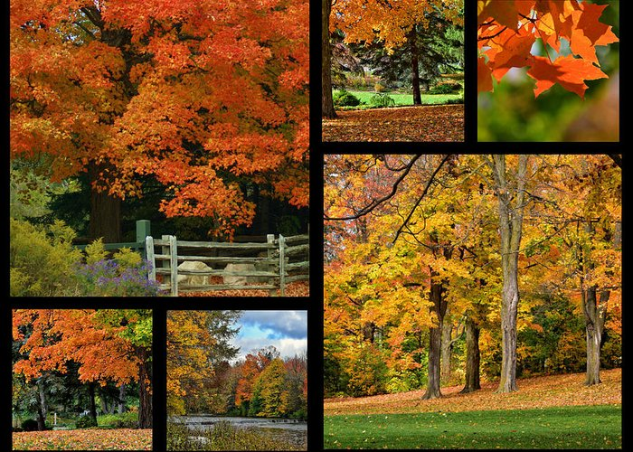 Autumn Greeting Card featuring the photograph Autumn Collage by Maria Keady