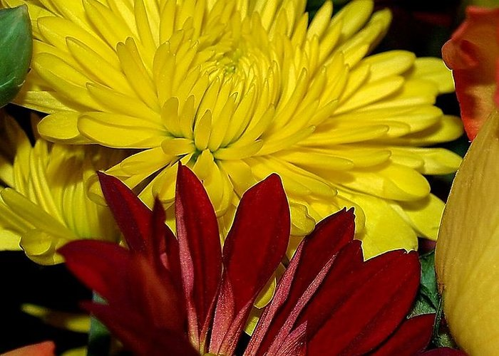 Chrysanthemum Photography Greeting Card featuring the photograph Autumn Colors by Patricia Griffin Brett