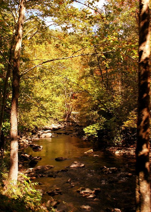 Creek Greeting Card featuring the photograph Autumn Creek by Kirby Larpenter