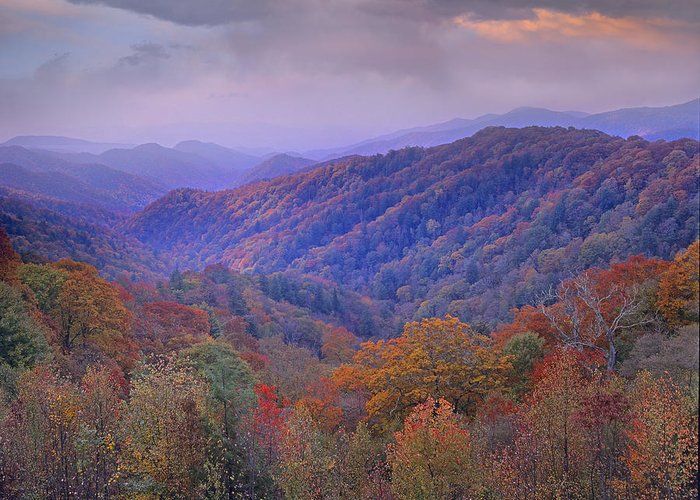 00175805 Greeting Card featuring the photograph Autumn Deciduous Forest Great Smoky by Tim Fitzharris