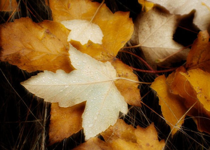 Leaf Greeting Card featuring the photograph Autumn Dew by Idaho Scenic Images Linda Lantzy