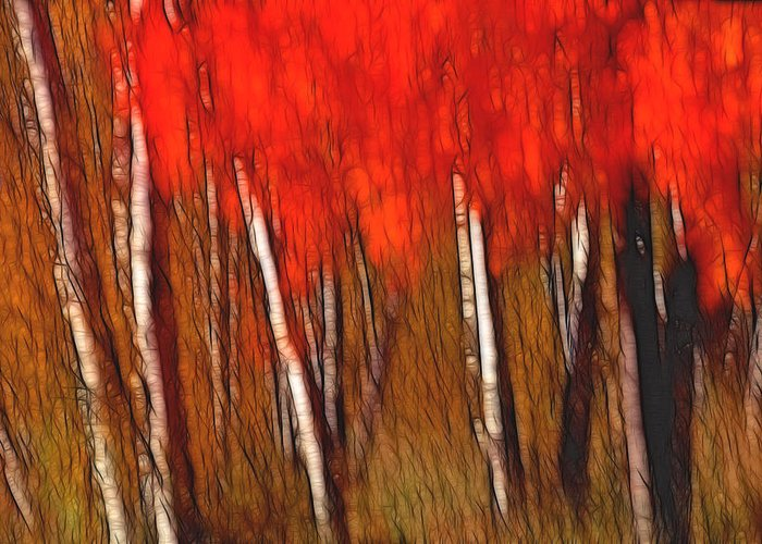Trees Greeting Card featuring the photograph Autumn Fire by Bill Morgenstern