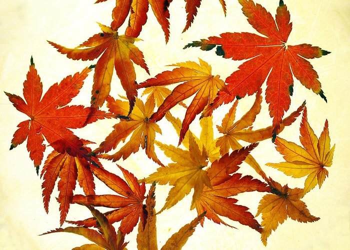 Autumn Greeting Card featuring the photograph Autumn Flury by Rebecca Cozart