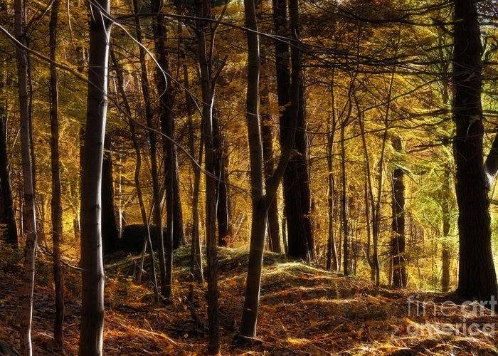 Autumn Greeting Card featuring the photograph Autumn Forest by Lutz Baar