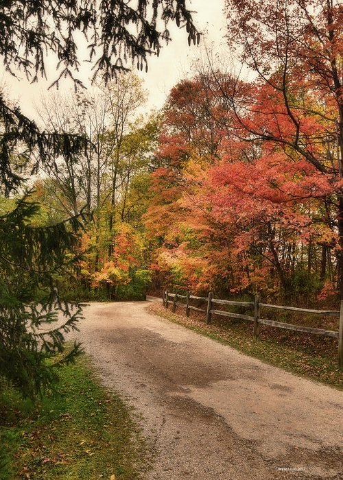 Autumn Greeting Card featuring the photograph Autumn Glory by Reese Lewis