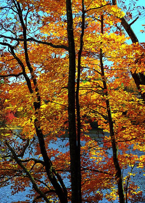 Fall Color Greeting Card featuring the photograph Autumn Gold by Alan Lenk
