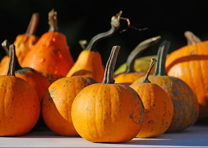 Autumn Greeting Card featuring the photograph Autumn Harvest Gourds by Tony Ramos
