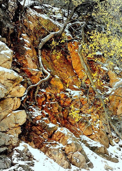 Rocks Greeting Card featuring the photograph Autumn High.. by Al Swasey