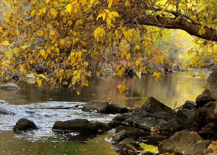 River Greeting Card featuring the photograph Autumn Hues by Jan Tribe