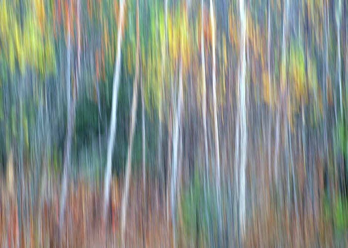 Forest Pastels Form An Autumn Impression Greeting Card featuring the photograph Autumn Impression by Bill Morgenstern