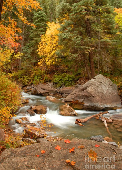 Autumn Greeting Card featuring the photograph Autumn In Alpine Loop by Dennis Hammer