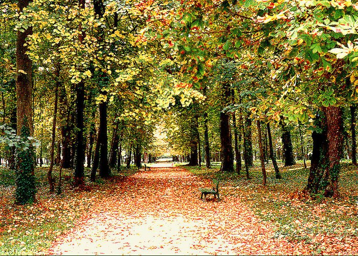Autumn Greeting Card featuring the photograph Autumn In The Park by Nancy Mueller