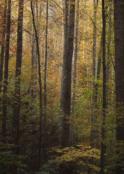 Autumn Greeting Card featuring the photograph Autumn In The Woods by Andrew Soundarajan