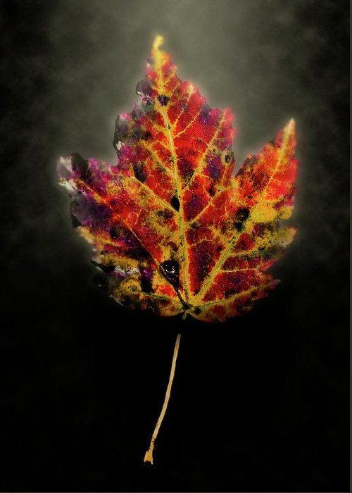 Leaf Greeting Card featuring the photograph Autumn by Jim Painter
