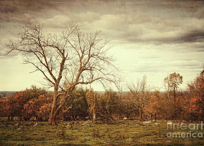 Autumn Greeting Card featuring the photograph Autumn Landscape In Late November by Sandra Cunningham