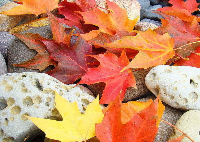Autumn Greeting Card featuring the photograph Autumn Leaves Art Print Coastal Fossil Rocks Baslee Troutman by Baslee Troutman